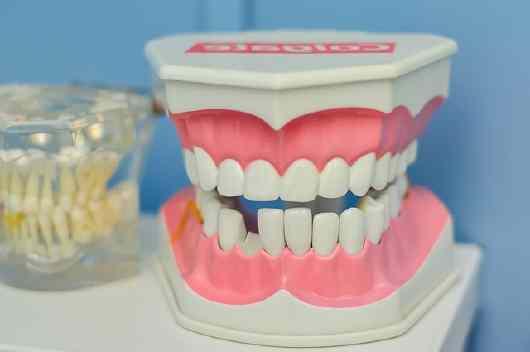 Modelo de boca