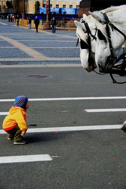 Little boy and horse